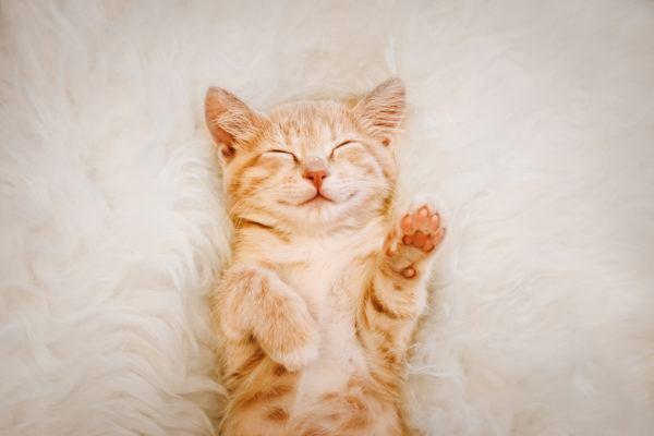 Dia internacional gato