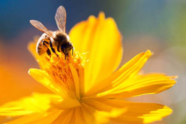 Dia mundial abejas cuando es el origen cual es su importancia