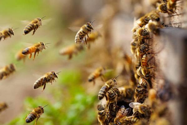 Dia mundial de abejas cuando es el origen cual es su importancia