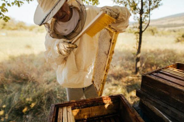 Dia mundial de las abejas cuando el origen cual es su importancia