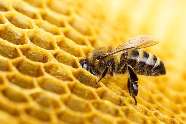 Dia mundial de las abejas cuando es el origen cual es importancia