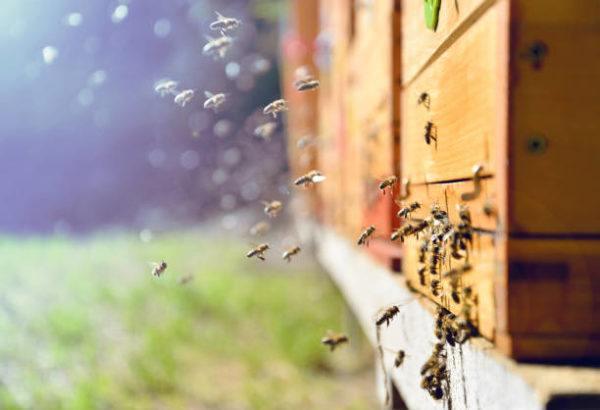 Dia mundial de las abejas cuando es el origen es su importancia