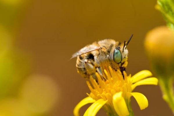 Dia mundial de las abejas cuando es origen cual es su importancia