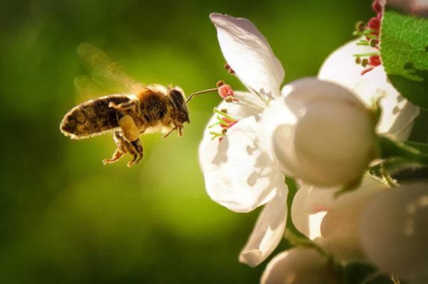 Dia mundial las abejas cuando es el origen cual es su importancia