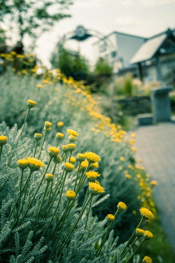 Los mejores consejos para desarrollar la resiliencia en nuestro jardín orientación