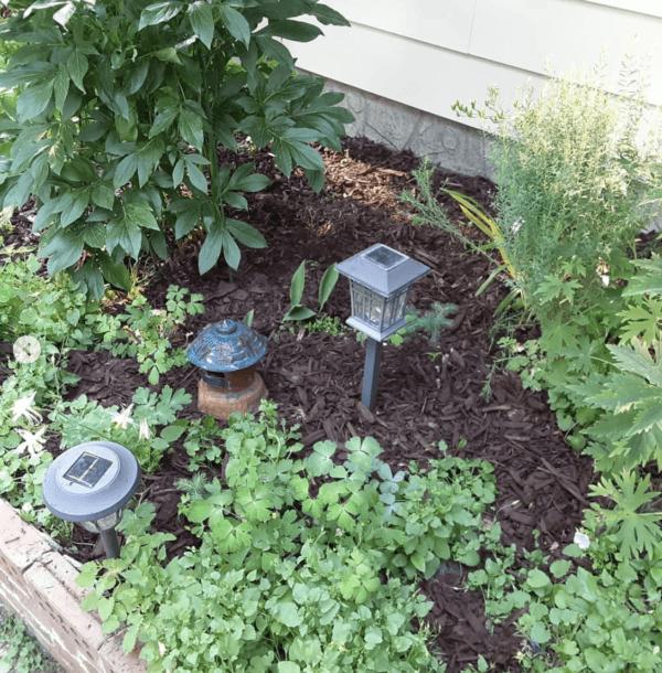 Los mejores consejos para desarrollar la resiliencia en nuestro jardín goteo