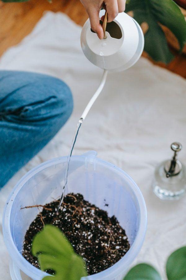 Los mejores consejos para desarrollar la resiliencia en nuestro jardín riego