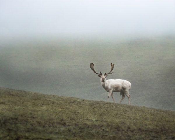 Tundra: qué es, sus características, clima, tipos, fauna y flora renos