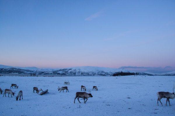 Tundra: qué es, sus características, clima, tipos, fauna y flora animales