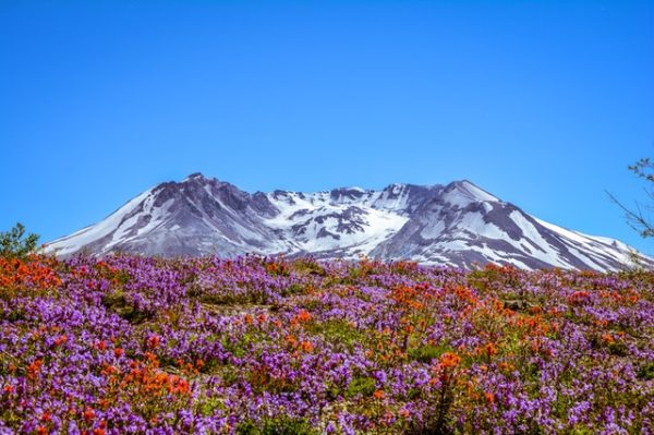 Tundra: qué es, sus características, clima, tipos, fauna y flora arbustos bajos