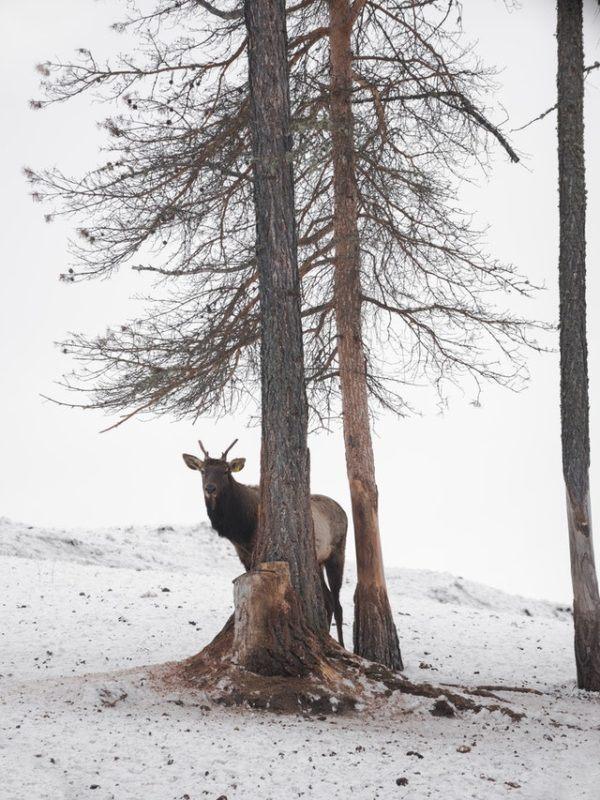 Tundra: qué es, sus características, clima, tipos, fauna y flora nieves