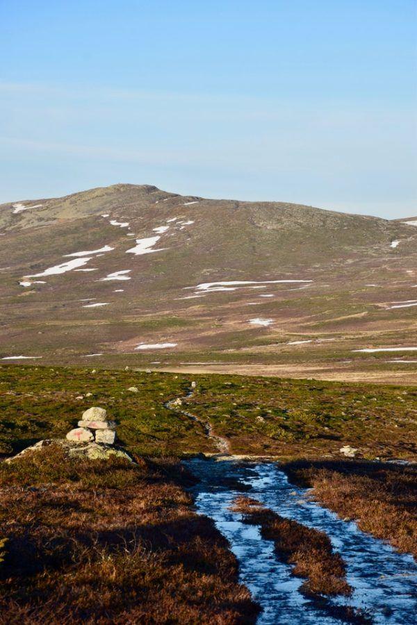 Tundra: qué es, sus características, clima, tipos, fauna y flora páramo