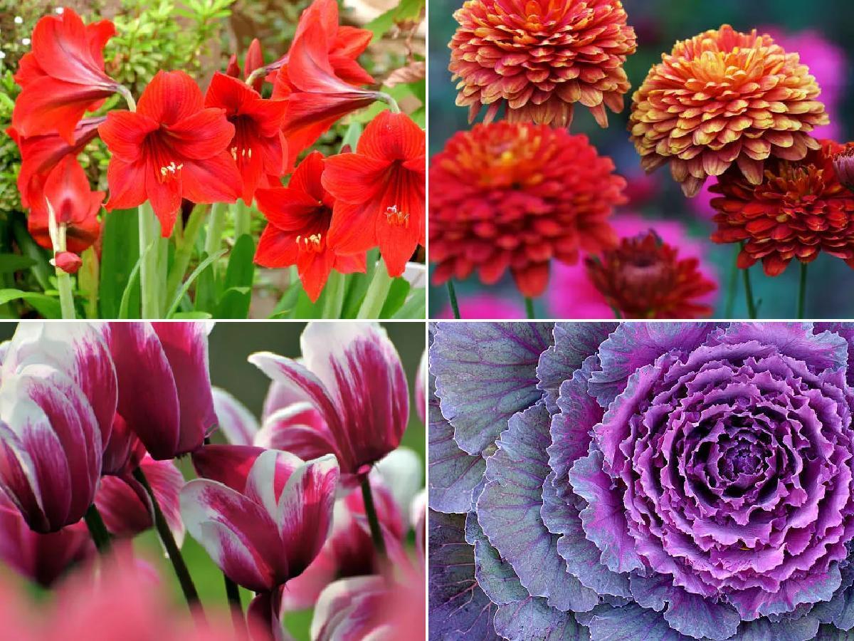 Cuáles son las flores de invierno