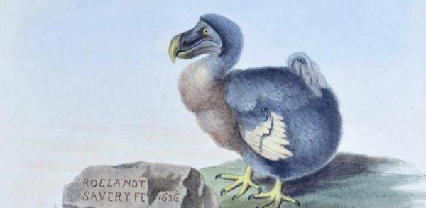 Cuales son los animales que se han extinguido por culpa del hombre dodo