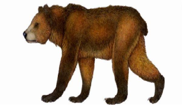 Cuales son los animales que se han extinguido por culpa del hombre oso del atlas