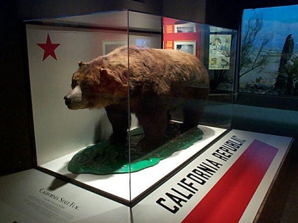 Cuales son los animales que se han extinguido por culpa del hombre oso grizzly