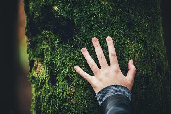 Dia mundial de la ecologia que es cuando se celebra y podemos celebrarlo