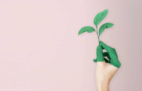 Dia mundial la ecologia que es cuando se celebra y como podemos celebrarlo