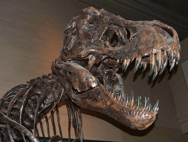 Que es un dinosaurio diferencias entre dinosaurios reales y las pelaculas en que epoca vivieron y habia