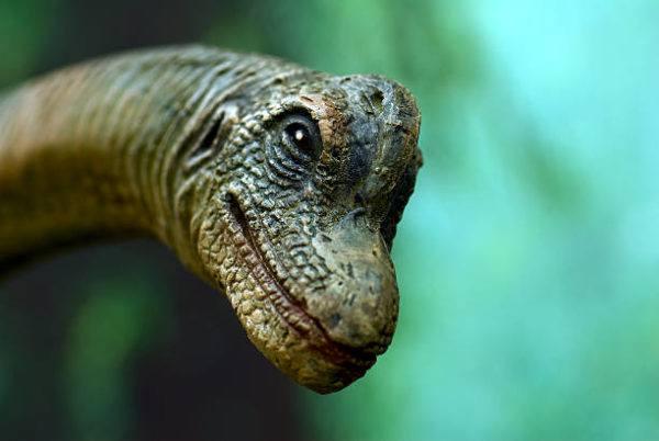 Que es un dinosaurio diferencias entre dinosaurios reales y las pelaculas epoca vivieron y cuantos habia