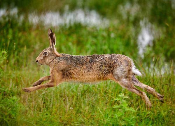 Por que los conejos salvajes ayudan a salvar ecosistemas 5