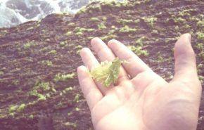 Biocombustible a partir de algas