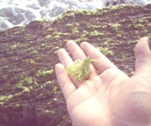 Biodiesel a partir de algas