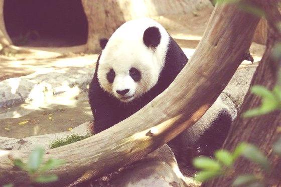 Lightmatter_panda