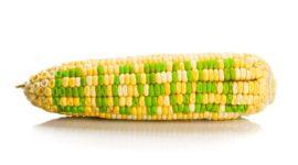 El origen del biodiesel: usos y ventajas