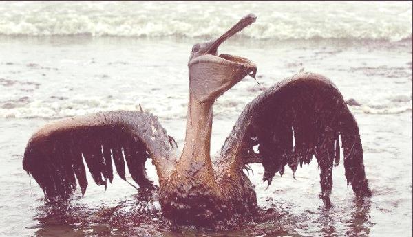 Recordamos | Derrame de petróleo en Golfo de México. Marea negra en Luisiana