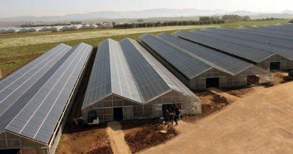 Energia solar para invernaderos coste