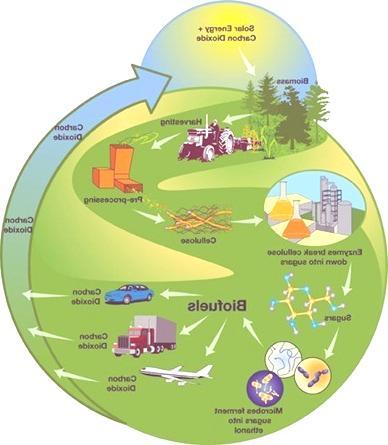 biomasa conversion