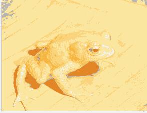 rana dorada