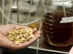 Biomasa de Madera, fuente de biocombustible y quimicos