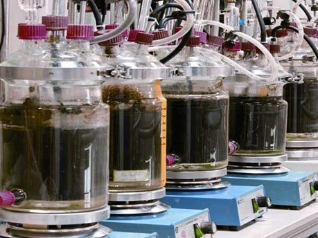 Producir Biogás con subproductos de aceite de pescado