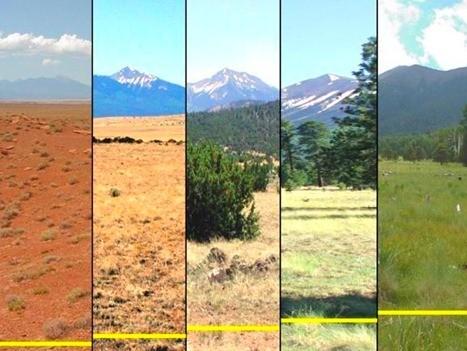 Sequías, cambio climático, ¿qué plantas sobrevivirían?