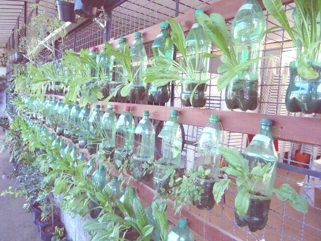 Ideas para reciclar las botellas de for Historia de los jardines verticales