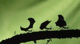 Cómo hacer que las hormigas se vayan de vuestra casa de forma natural