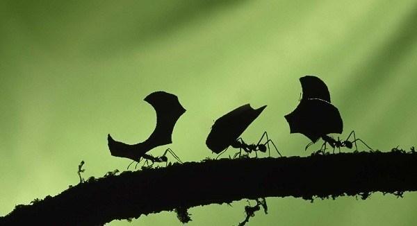 echar hormigas de casa