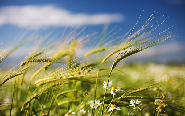 energia viento
