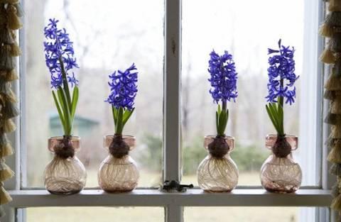12-bonitas-formas-de-tener-plantas-de-interior-bulbo-artificial