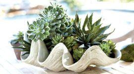 25 bonitas formas de tener plantas de interior