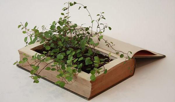 25 bonitas formas de tener plantas de interior - Plantas de interior bonitas ...