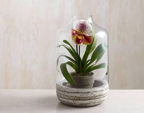25 bonitas formas de tener plantas de - Plantas bonitas de interior ...