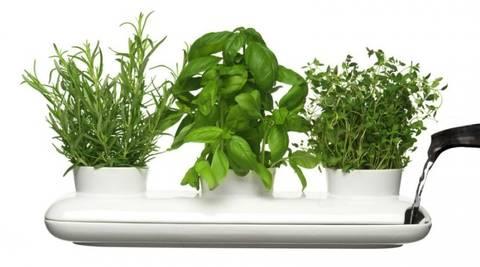12-bonitas-formas-de-tener-plantas-de-interior-regado-comun