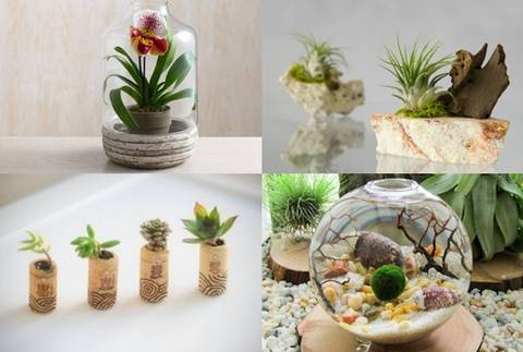 25 bonitas formas de tener plantas de interior for Decoracion de casas con plantas de interior