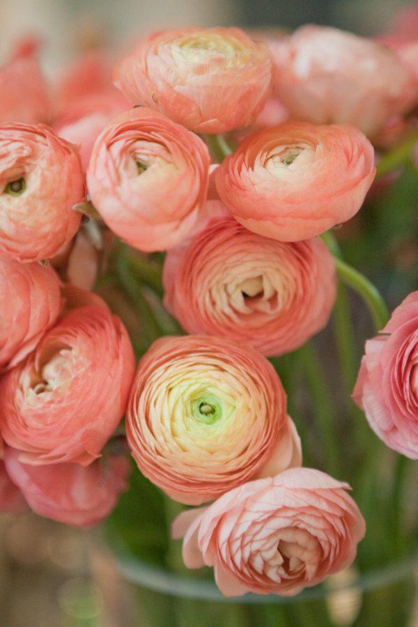cuales-son-las-flores-de-primavera-ranunculos