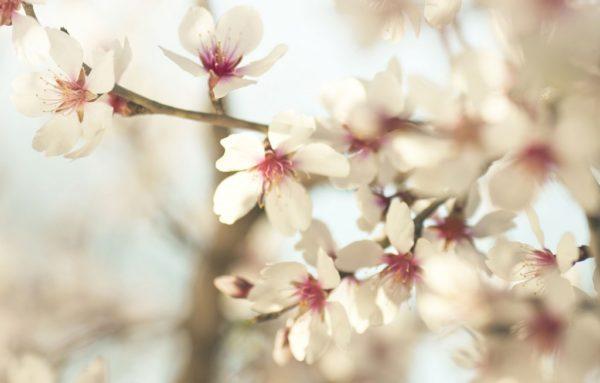 cuales-son-las-flores-de-invierno
