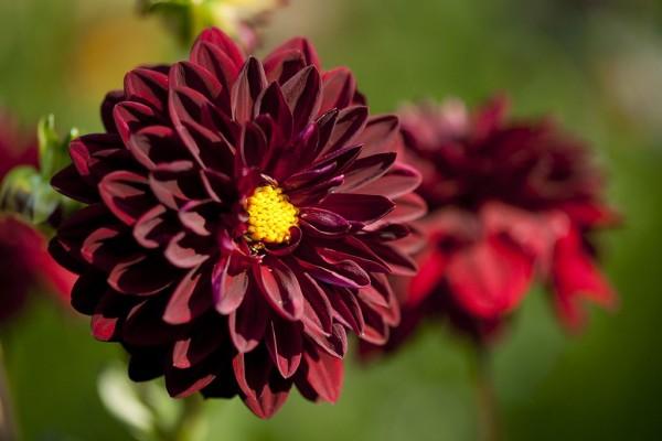 cuales-son-las-flores-de-otono