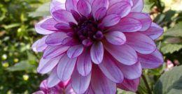 Cuáles son las flores del verano
